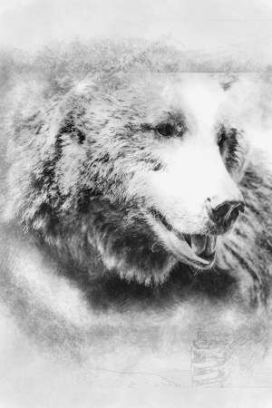 carnivore, brown bear, majestic and powerful animal black and white drawing