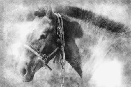 Picture of a horse on the hill. black and white drawing