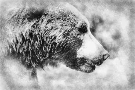 beautiful and furry brown bear, mammal black and white drawing