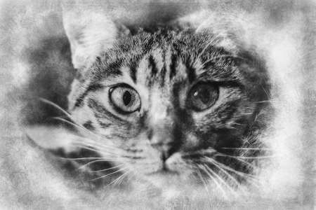 young common cat with soft skin black and white drawing Standard-Bild