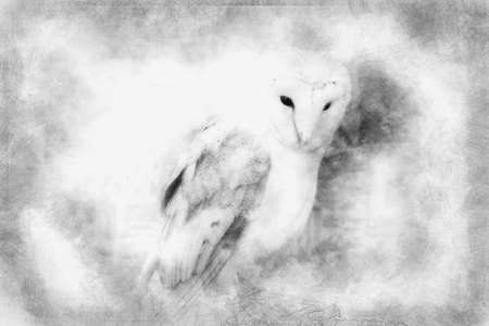 Owl portrait, white bird black and white drawing