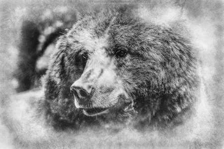 zoo, beautiful and furry brown bear, mammal black and white drawing Standard-Bild