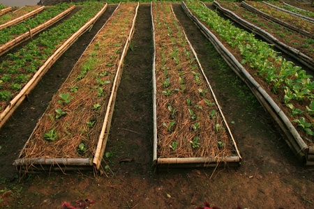 vegetable farm photo
