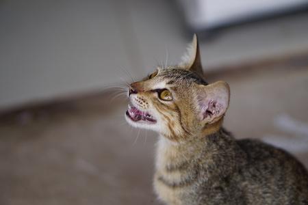 growl: kitty