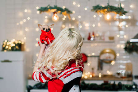Portrait of blonde woman wearing Christmas Santa holding chihuahua dogs in Christmas costume in kitchen with Christmas decoration, smiling and looking at camera.
