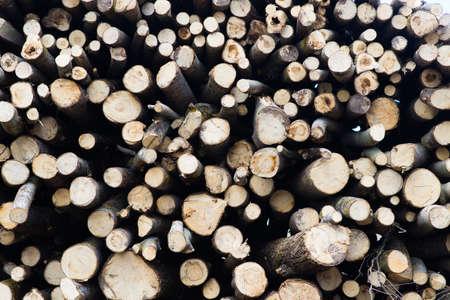 Beech logs, national park, forest lumber Wood materials Stock Photo