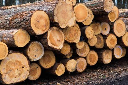 Beech logs, national park, forest lumber Wood materials