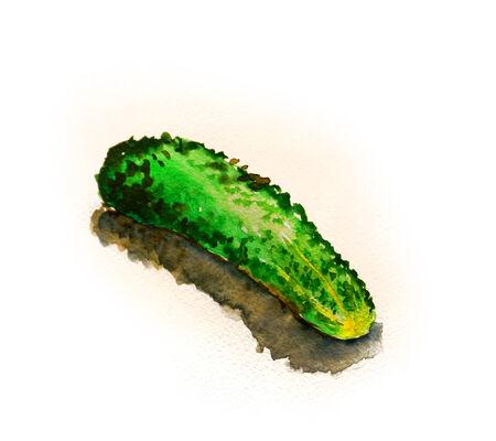 Raster watercolor hand drawn vintage illustration of cucumber illustration