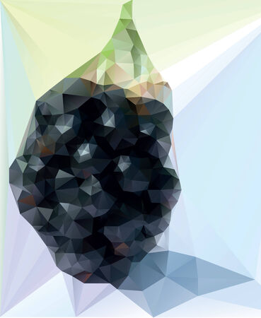 healty eating: Blackberry illustration. Triangle vector style. Geometry background