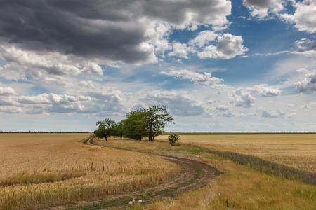 村の近くの麦畑のなかの田舎道