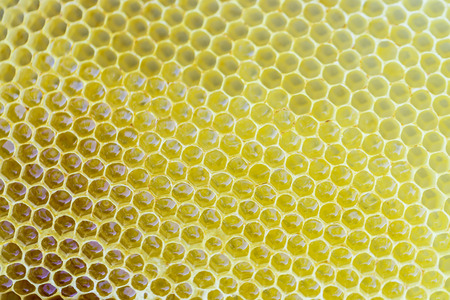 Hexagonal honeycombs filled with fresh honey as a background or a backdrop Stock Photo