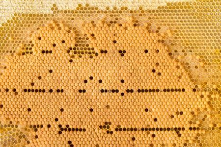 Beautiful golden hexagonal honeycomb as background or backdrop