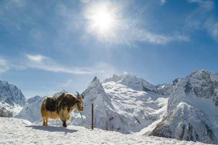 Winter landscape. White mountains of the Caucasus Stock Photo