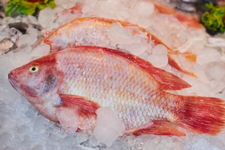 Fresh appetizing red snapper lies on ice on a market counter. Foto de archivo