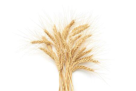 Bunch of ripe golden wheat on a white background. Reklamní fotografie