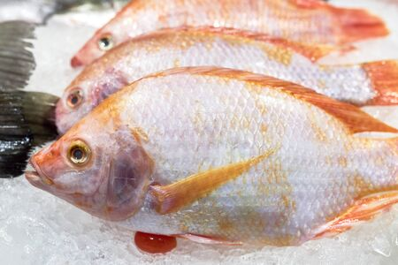 Several red snappers lie on ice for saving of freshness. Foto de archivo