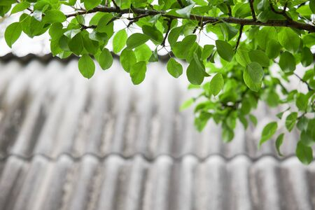 Branch with green leaves on the background of a slate roof of a country house as a backdrop.