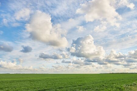 Green field and beautiful cloudy sky as background or backdrop. Archivio Fotografico