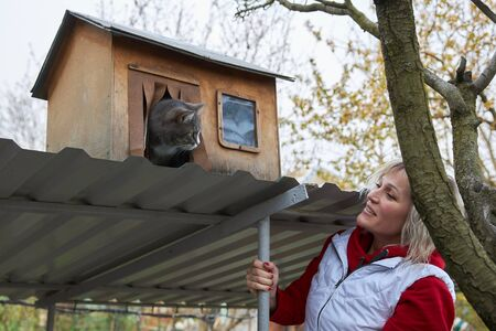 Gray cat looks from its wooden house at its owner Archivio Fotografico - 147614798