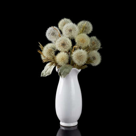Bouquet of dried dandelions stands in a white vase on a black background. Archivio Fotografico