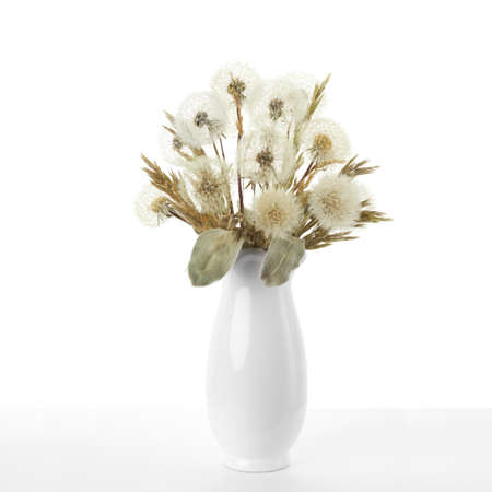 Bouquet of dried dandelions stands in a white vase on a white background.