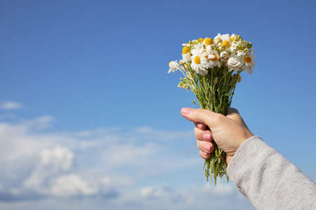 A bouquet of daisies in a female hand against the blue sky.