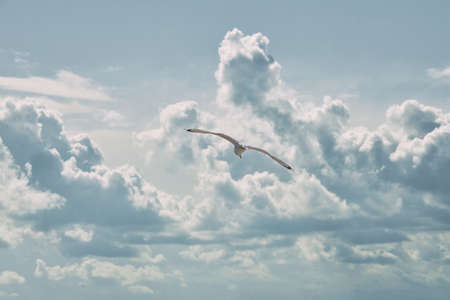 Lonely seagull flies against the background of clouds.