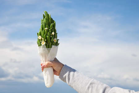 A small bouquet of green pea pods against a blue sky.