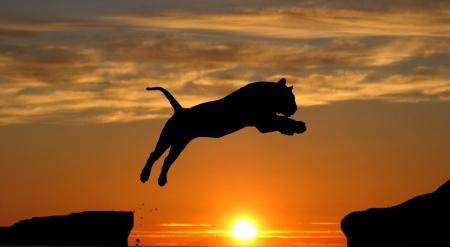tygrys Zdjęcie Seryjne