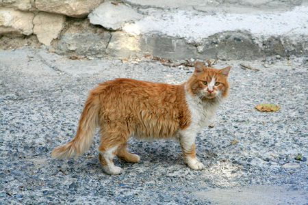 Stray ginger cat on a shabby street