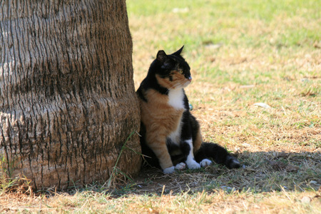 Cat sitting in the shade of a tree Stock Photo
