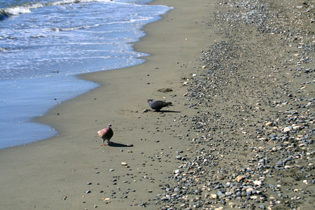 Two pigeons standing on a sandy beach