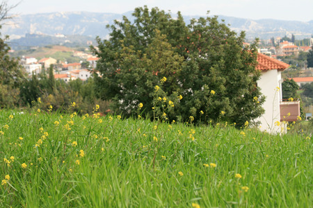 Green grass and yellow wildflowers