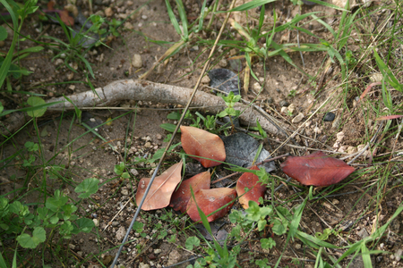 Leaves and sticks on the ground