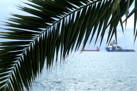 Close-up of the green palm tree leaves in front of the blurred light blue sea 版權商用圖片