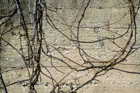 Rough concrete wall with thin dry twigs in sunlight
