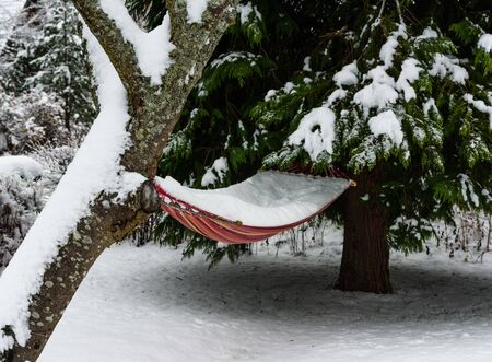 Hammock filled with snow hanging in winter forest
