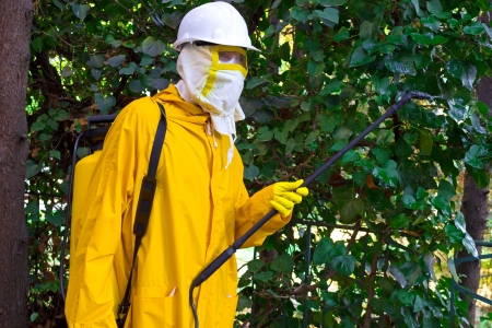 pest control: Man in a protective suit spraying plants against pests, Disinfection, photography