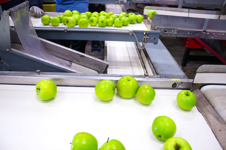 Line for the packaging and selection of fresh and green apples, Apples in a Packing Plant, photography