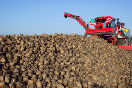 compared: The harvest of sugar beet ; Modern machines for cleaning, separation and loading of sugar beet
