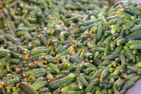 A Lot of Raw Cucumbers ; A Lot of Raw Cucumbers in processing plant