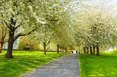 country park: path in a park in Bristol, UK