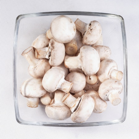 Mushroom Stockfoto
