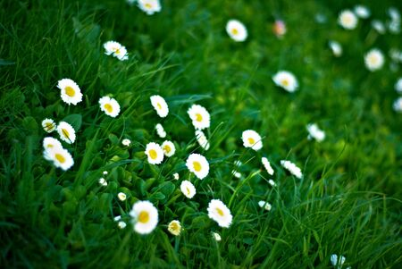 flowers and the grass Stock Photo