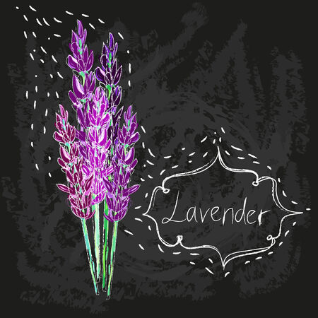 vector watercolor lavender delicate bunch set. pastel nature aromatherapy elements. herb garden plant Vector
