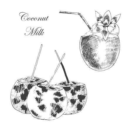 coco: vector de la mano de coco Esbozo dibujado con hojas de palma. ilustraciones de estilo vintage de tinta detallada y lápiz