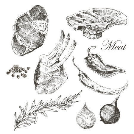 pork chop: vector steak meat hand drawing with pepper and rosemary. detailed ink food illustrations