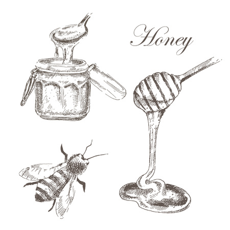 honey: vector honey, honey cells, honey stick, bee illustration. detailed hand drawn sketch of nature object Illustration