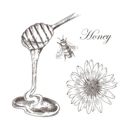 miel de abeja: miel de vectores, células de la miel, miel de palo, ejemplo de la abeja. mano dibujado croquis detallado de naturaleza objeto Vectores