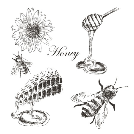 vector honey, honey cells, honey stick, bee illustration. detailed hand drawn sketch of nature object Ilustrace